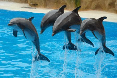 Theme Parks, Animals & Shows image